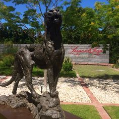 Leopards Leap and Dylan Lewis a shared passion for conservation Garden Sculpture, Lion Sculpture, Leopards, Conservation, South Africa, Westerns, Cape, Passion, Statue