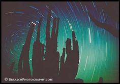 Stars. Cardon cactus. Night. Deserts. Sonoran Desert, Mexico. Skies. Time exposures. Silhouettes. Polaris. North Star. Patterns. Time. Space