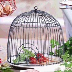 {Vintage Farmhouse} Round Metal Wire Cloche from www.WUSLU.com Daily Deal