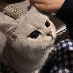 how to pet a dog Cute Cats And Kittens, I Love Cats, Crazy Cats, Kittens Cutest, Cute Funny Animals, Cute Baby Animals, Funny Cats, Pretty Cats, Beautiful Cats