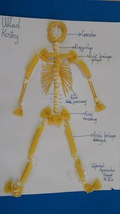 Układ kostny, szkielet, makaron, przyroda kl.IV