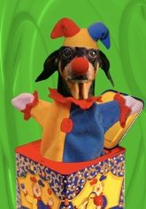 """Musical dachshund thank you card, featuring the singing dachshund, Lucy Lou.Inside message: """"What a surprise! Musical Cards, Black And Tan Dachshund, Dog Cards, Weiner Dogs, Scooby Doo, Thank You Cards, Musicals, Singing, Greeting Cards"""