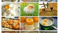 Eggs – Tuesday's Language Course Daily Jigsaw Puzzle
