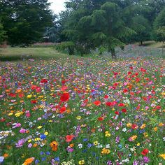 The best place in the UK for grass, wildflower, meadow and flower seeds. Wild Flower Meadow, Meadow Flowers, Flowers Nature, Wild Flowers, Wild Flower Gardens, Field Of Flowers, Flowers Garden, Meadow Garden, Dream Garden