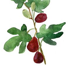 Fig print of original watercolor painting , botanical, Mediterranean, mountain of spices, Green, wine red, Purple , wall decor $21.00