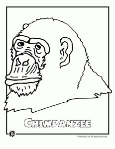 Endangered Chimpanzee Animal Coloring Page