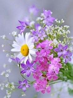 delicate flowers ~ pretty