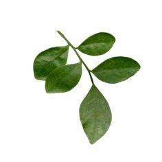 Yandex.Disk Love Is Sweet, Plant Leaves, Mint, Yandex Disk, Green, Plants, Plant, Planets, Peppermint