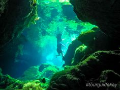 Most likely, you have never seen something like this before. Let's explore the cenotes of the Riviera Maya.  #tourguidekay #privatetours #kaytours #cenotes #rivieramaya #playadelcarmen #tulum #cancun #mexico #traveltips