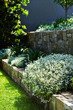 Mosman Landscape Design: Outdoor Establishments Architectural Landscape Design