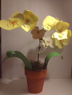 Yellow paper orchids from Lia Griffith