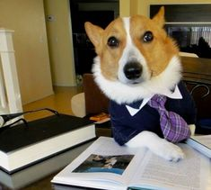 Lawyer Dog is the hot new dog meme. He didn't go to law school but he still passed his state bark exam with flying colors. Keep him in mind next time you need beagle representation. | The Best Of The Lawyer Dog Meme