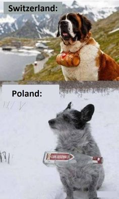 All of the cutest and most lovely animals from all around the world! - Poland can into space (and dogs) New Funny Memes, Stupid Funny, Best Memes, Cute Funny Animals, Funny Cats, Hetalia Anime, America Funny, Laugh Out Loud, Cute Puppies