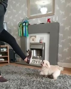 Cute Funny Dogs, Cute Funny Animals, Cute Baby Animals, Cute Dogs And Puppies, Baby Dogs, Doggies, Cute Animal Videos, Funny Animal Pictures, Animal Antics