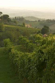 It calls to me! Come to Tuscany, it says. Cool Places To Visit, Great Places, Beautiful World, Beautiful Places, Emilia Romagna, Toscana Italia, Under The Tuscan Sun, Italian Villa, Voyage Europe