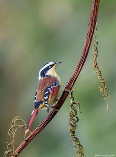 Hughe vtáky