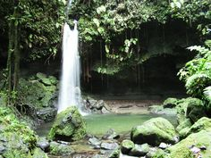 Emerald Pool, Dominica, West Indies