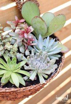 DIY Succulent Wall Planter from @inspiredbycharm