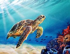 Turtle Painting - Caribbean Reef Turtle by Marco Antonio Aguilar Sea Turtle Painting, Sea Turtle Art, Turtle Love, Acrylic Painting Canvas, Canvas Art, Sea Turtle Pictures, Underwater Painting, Cute Turtles, Sea Turtles