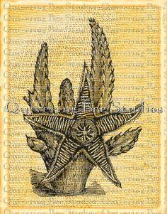 Starfish Sea Image Digital Graphic by QuiveringBeeStudios on Etsy, $2.95
