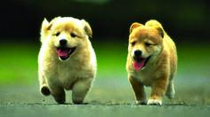 Dog lovers HD wallpaper [1920x1080]