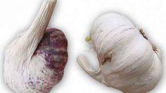 Garlic, Vegetables, Vegetable Recipes, Veggies