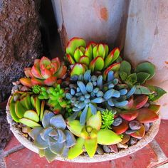 Spring Succulent Arrangement from RotdCreations