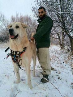 Dog Best Friend, Best Friends, Big Dogs, Large Dogs, Extra Large Dog Breeds, Four Legged, Biggest Dog, Labrador Retriever, Creatures