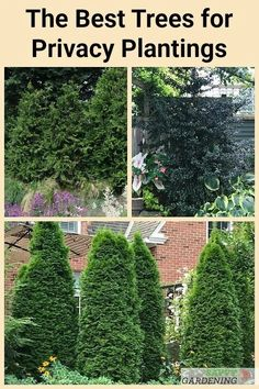 The Best Trees for Privacy Screening in Big and Small Yards – modern landscape design front yard Evergreen Trees For Privacy, Best Trees For Privacy, Hedge Trees, Shrubs For Privacy, Evergreen Landscape, Trees To Plant, Privacy Screen Plants, Privacy Trellis, Privacy Hedge