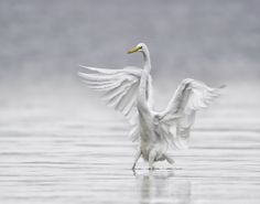 Photograph Landing in the Fog by Daniel Parent on 500px