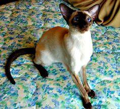My kitty, Cat woman, Lilo