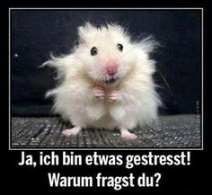 Plus, ein Habitat Book Cover Freebie - Witzig - Lustig Funny Animal Memes, Cute Funny Animals, Funny Animal Pictures, Cute Baby Animals, Funny Cute, Animal Humor, Smiling Animals, Funny Work, Funny Photos