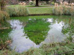 Bishop's Palace Garden Wells| garden designers| genius loci| Hegarty Webber Partnership