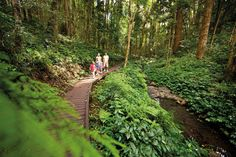 #GetOutThere  --  Bunya Mountains National Park, Southern Queensland Country