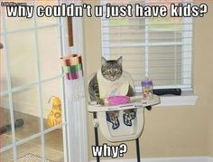 Lol the cat knows me! <3