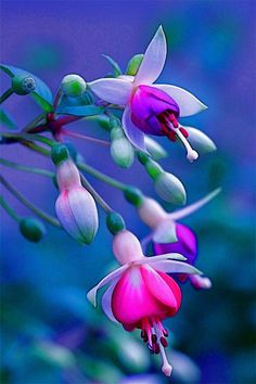 flowersgardenlove:  Stunning.. Beautiful gorgeous pretty flowers