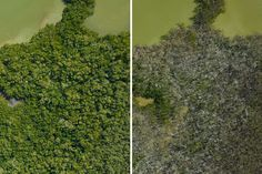 NASA Mapping Hurricane Damage to Everglades : Image of the Day : NASA Earth Observatory