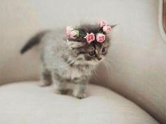 A sweetheart of a kitten wearing sweetheart roses.                        Una hermosura.