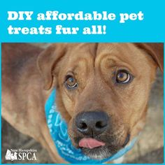 Find some healthy and affordable DIY pet treats here!  #DIY #PetTreats #HealthyTreats