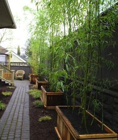 container planting - between house & neighbors...string clear lights in bamboo?