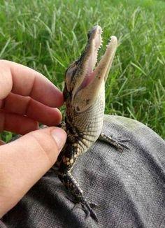 Ahhh... Back rub. #happy #animals