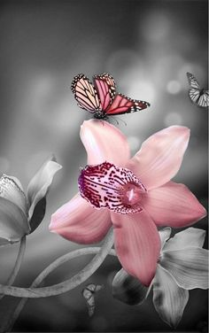 Just a touch of colour - flower and butterfly