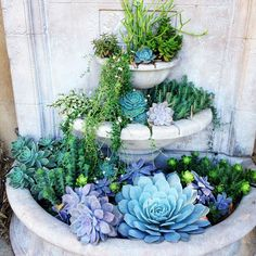 Turn your fountain into a colorful succulent garden!