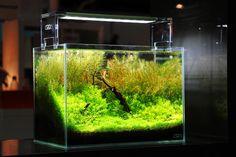 Aquascaping ist die faszinierende Art der Gestaltung eines Aquariums. Ließ hier, worum es beim Aquascaping und im Naturaquarium geht.