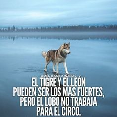 If you've been looking into Internet Marketing or making money online for any amount of time. Motivational Phrases, Inspirational Quotes, Quotes En Espanol, Harvey Specter, Spanish Quotes, Just In Case, Quotations, Me Quotes, Husky