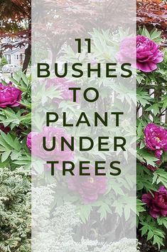 Find out which bushes to plant under trees in the shade garden in your backyard or front yard. These shrubs will help to brighten up your yard. #fromhousetohome #bushes #shade #gardeningtips #gardening #gardenideas Shade Loving Shrubs, Shade Shrubs, Shade Garden Plants, Ground Cover Plants Shade, Shaded Garden, Summer Plants, Garden Shrubs, Garden Trees, House Plants