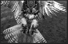 Owl Bird, Bird Art, Throat Tattoo, Owl Tattoo Design, Owl Pictures, Beautiful Owl, Gray Owl, Nature Animals, Sleeve Tattoos