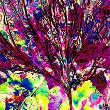 imagenes microscopicas - Buscar con Google
