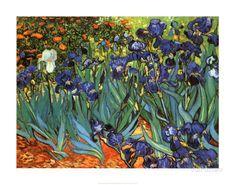 Irises, Saint-Remy, c.1889 Prints by Vincent van Gogh - AllPosters.ca