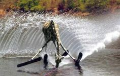 Giraffe on the water
